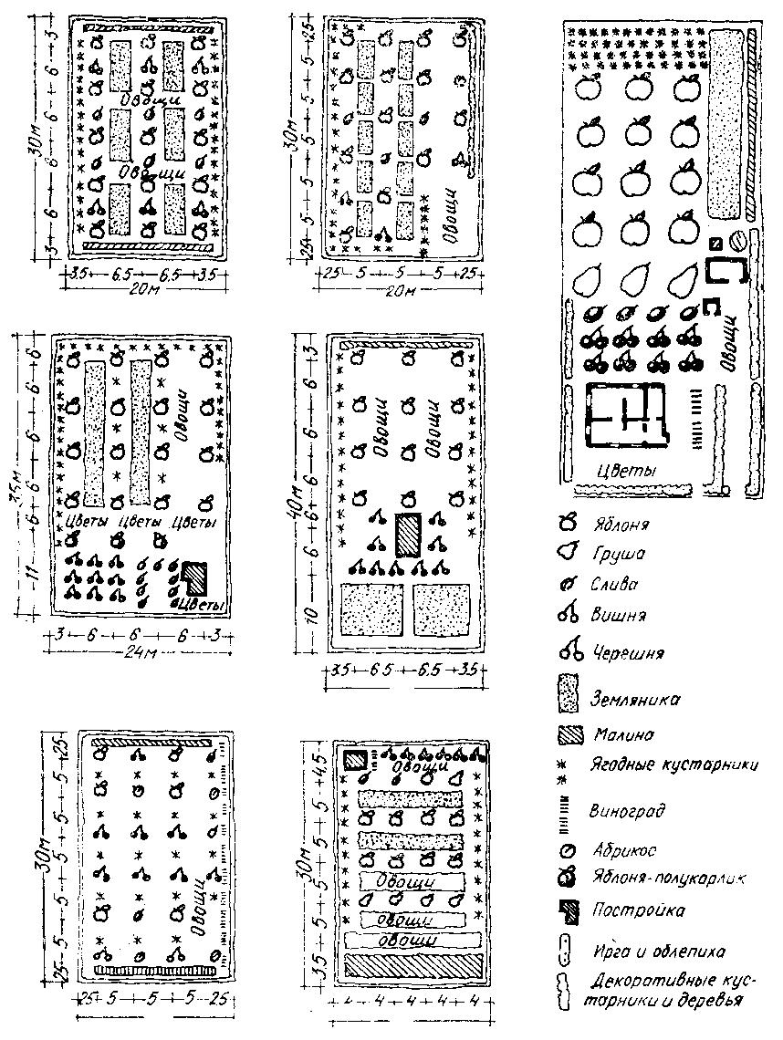 Схема посадки плодовый деревьев