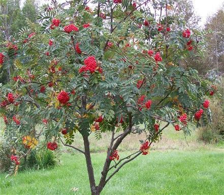 Осенний дерево раскраска